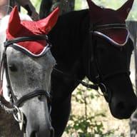 Domaine Equestre de St Martin d'Abbat